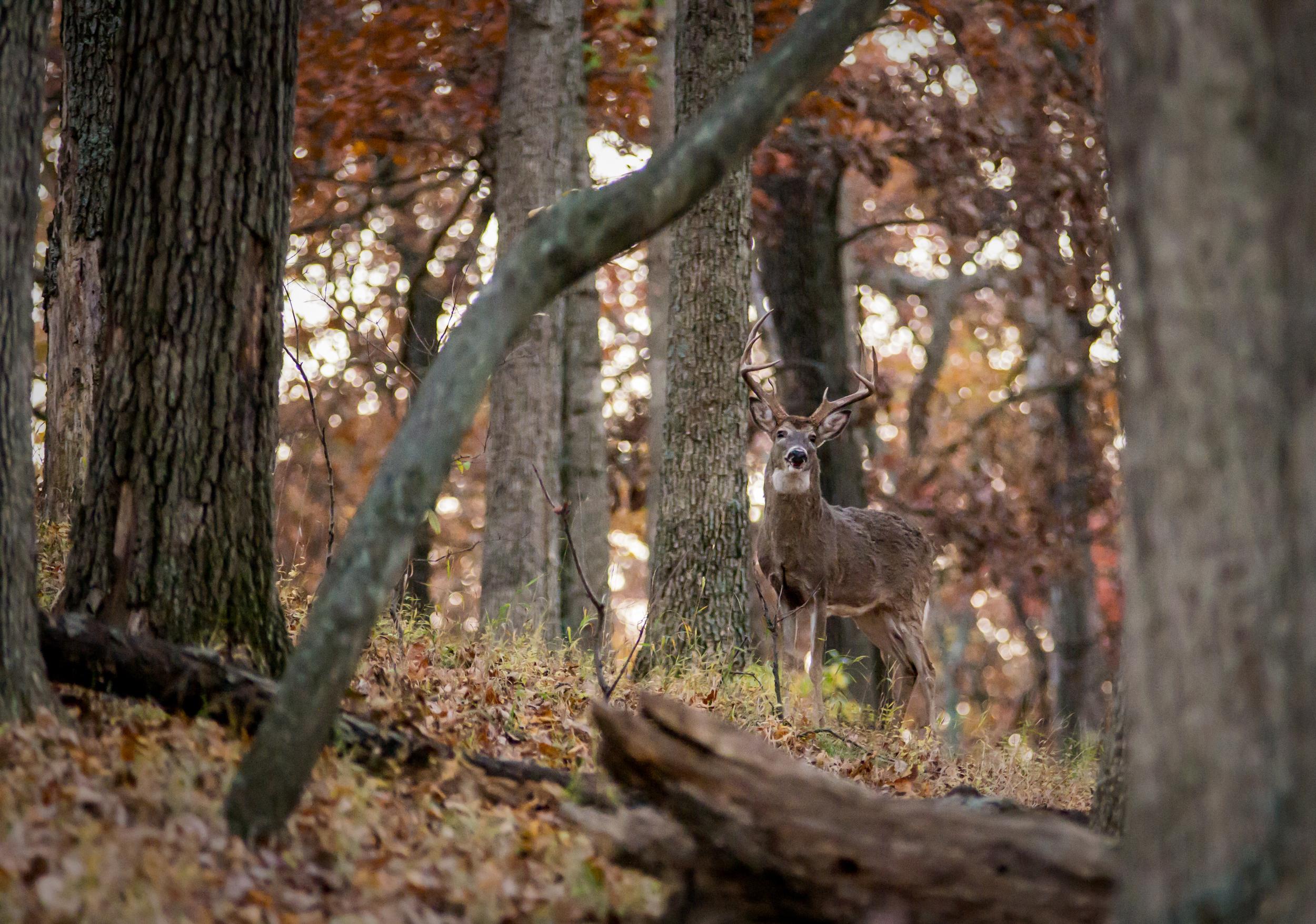 20131109-Lone Elk Park-PMG_2555.jpg