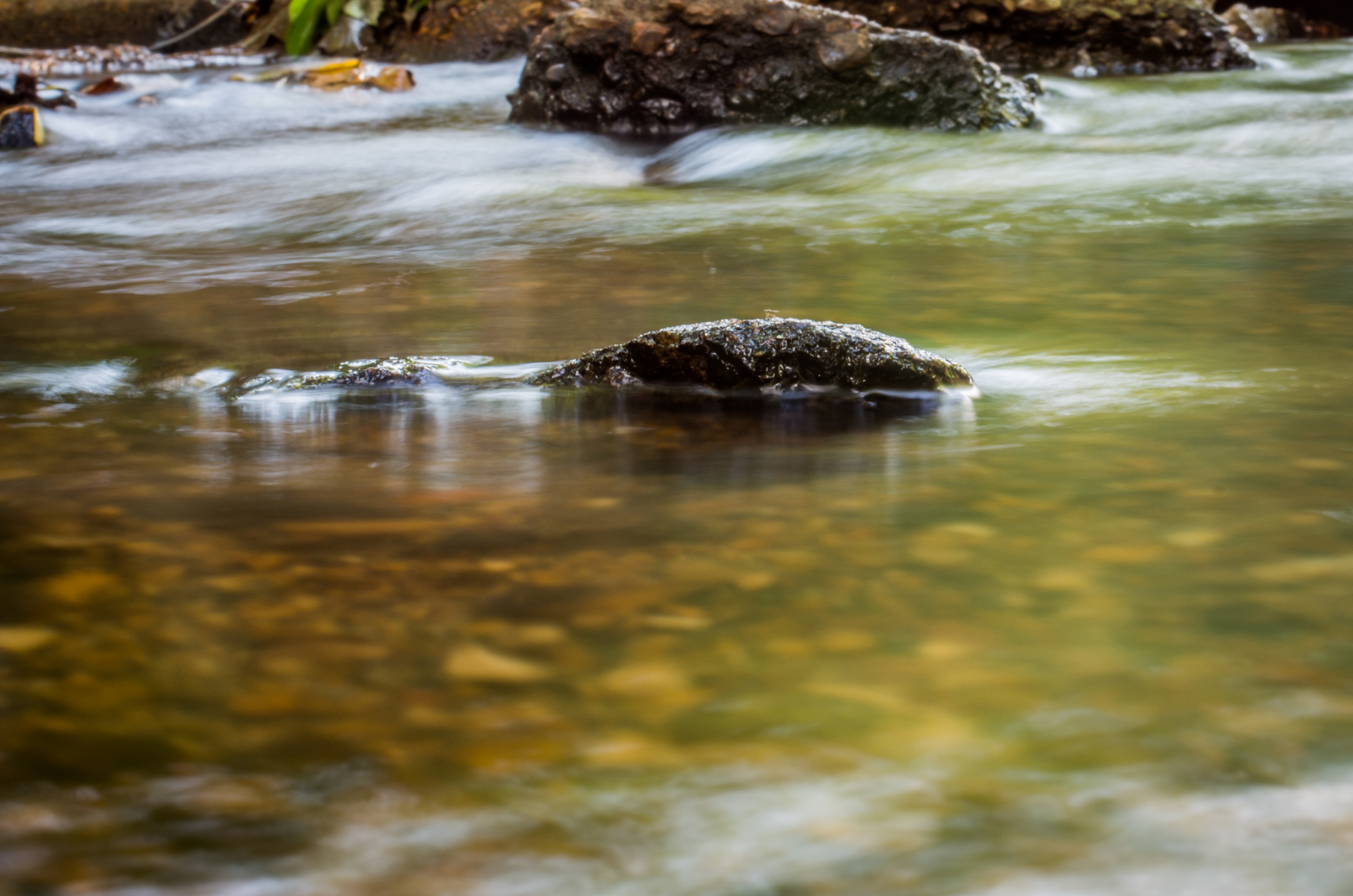 20140831-Heman Park Water-PMG_6201.jpg