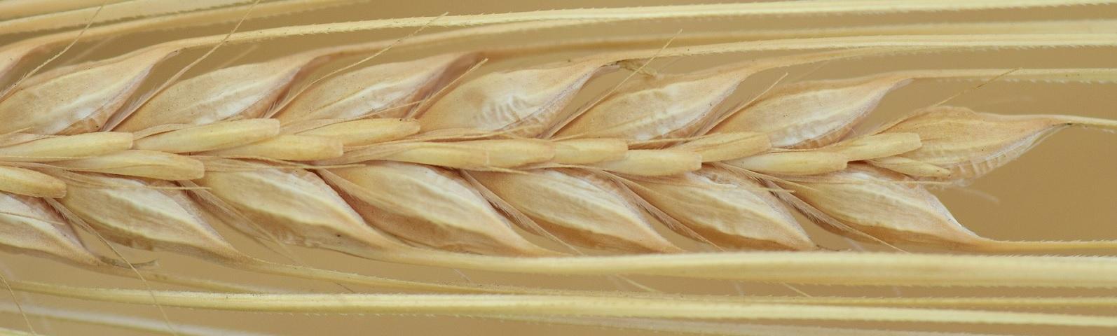 1709-Glutenvrije-producten-niet-altijd-beter-1600x480.jpg