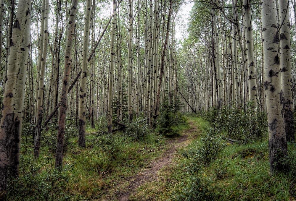 Jaspar   National Park, Alberta, Canada