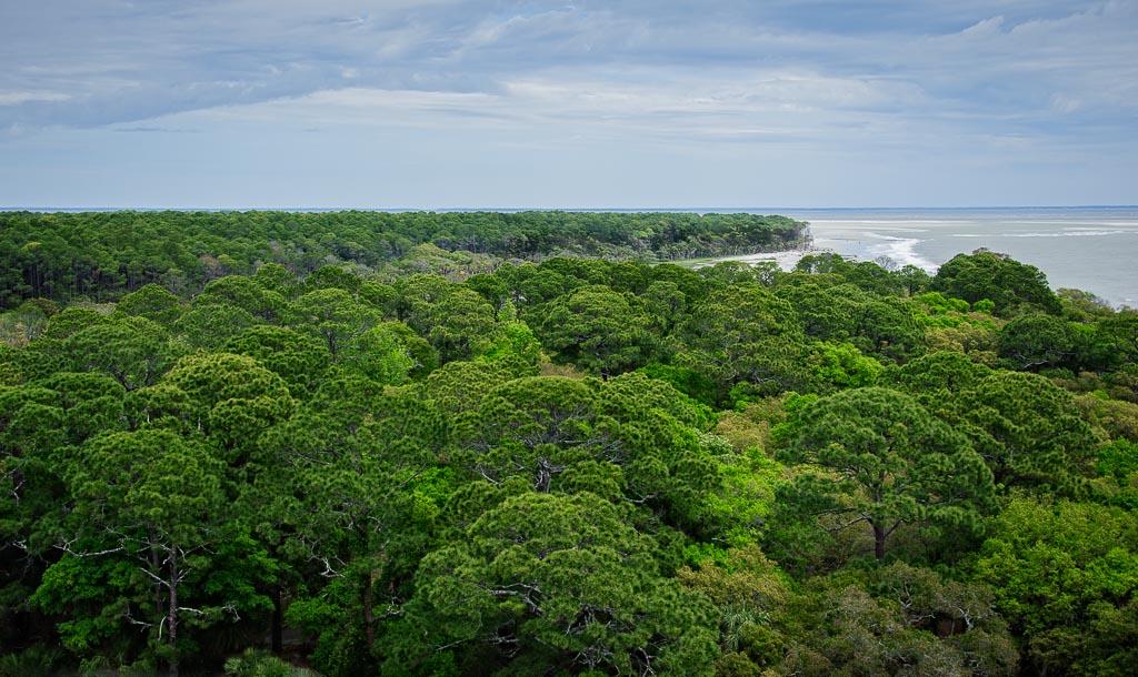 View   From Hunting Island Lighthouse, Hunting Island, South Carolina