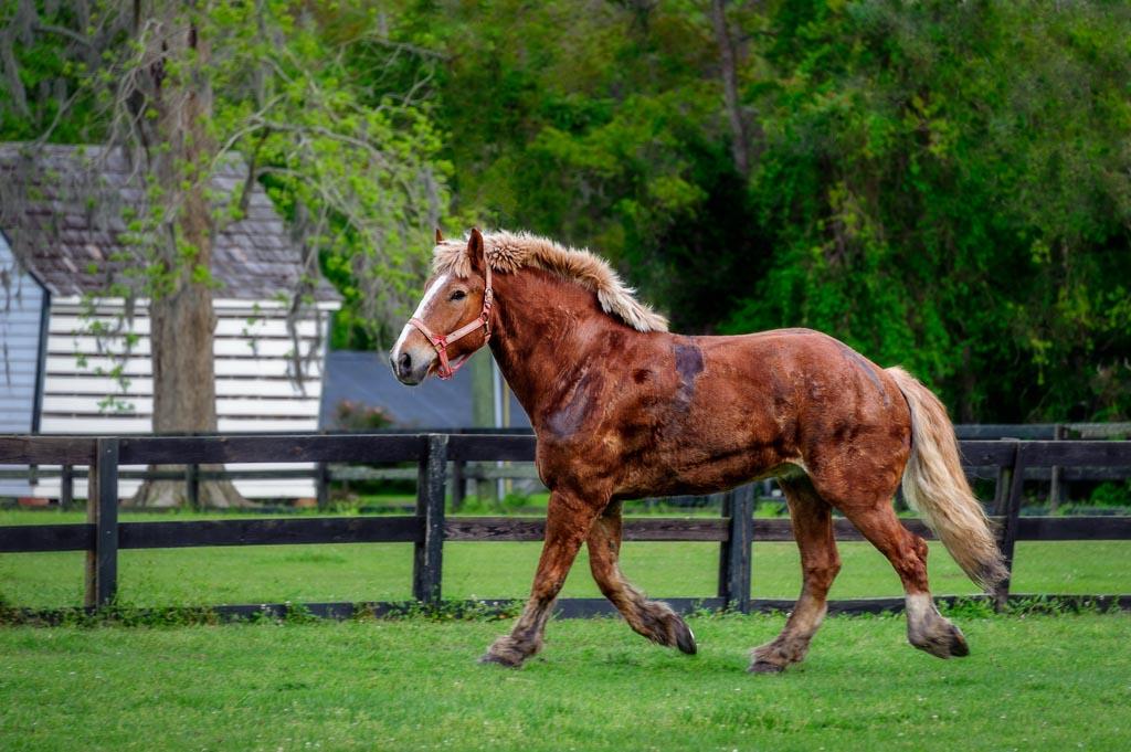 Boone Hall Plantation, Mt Pleasant, South Carolina