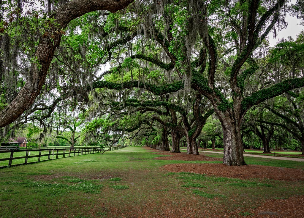 Boone Hall Plantation, Mt Pleasant, South Carolina