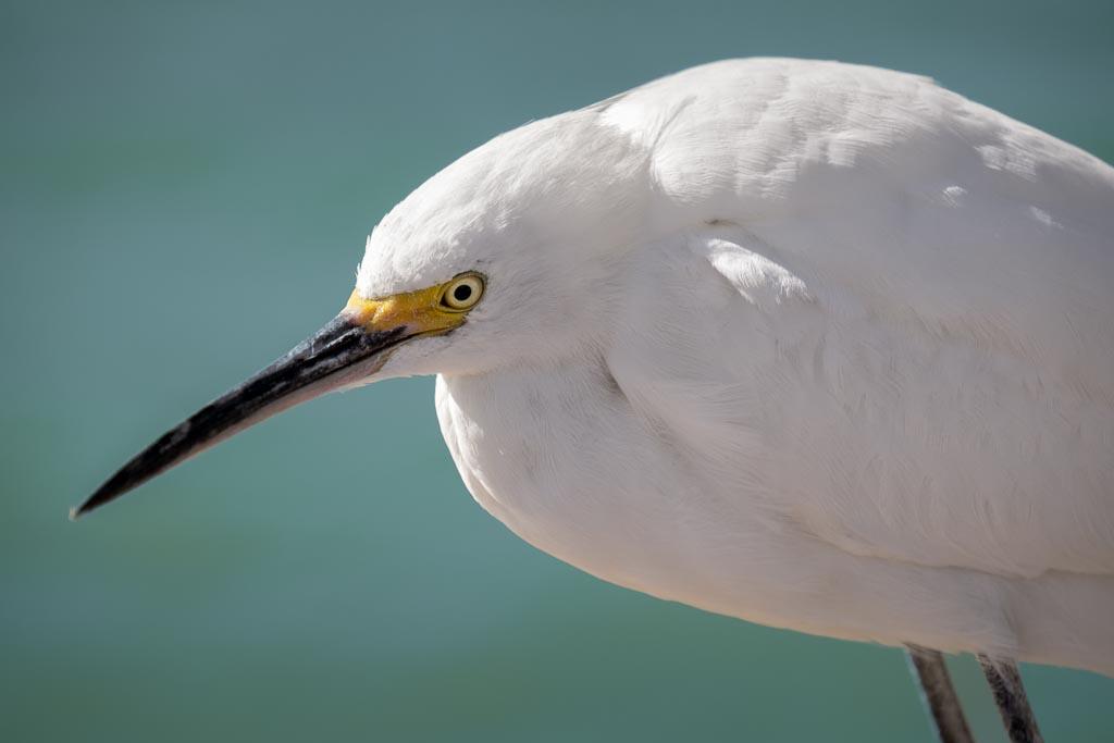 Sanibel FishingPier, Sanibel, Florida