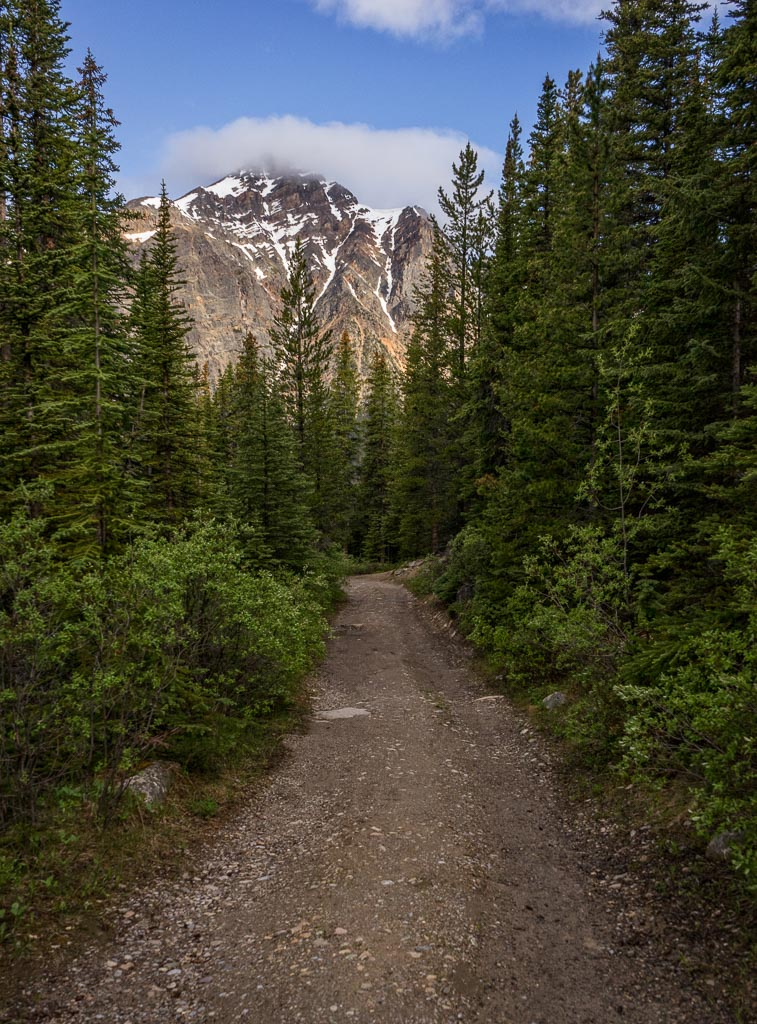Path of the Glacier Trail, Jasper National Park, Alberta, Canada