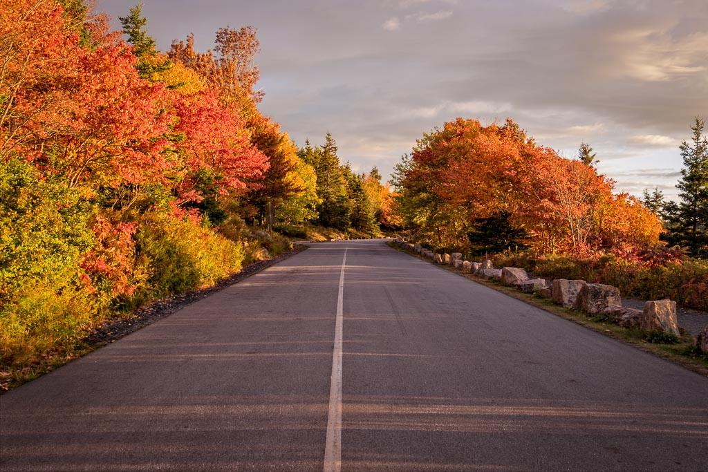 Acadia Foliage