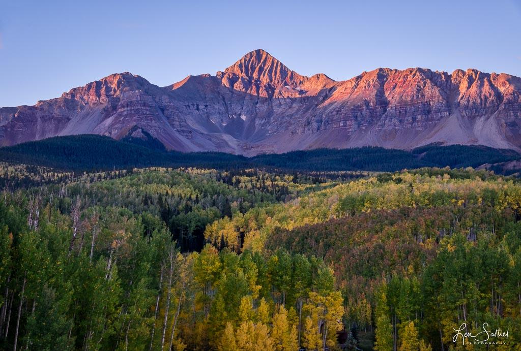 Aspen Beauty