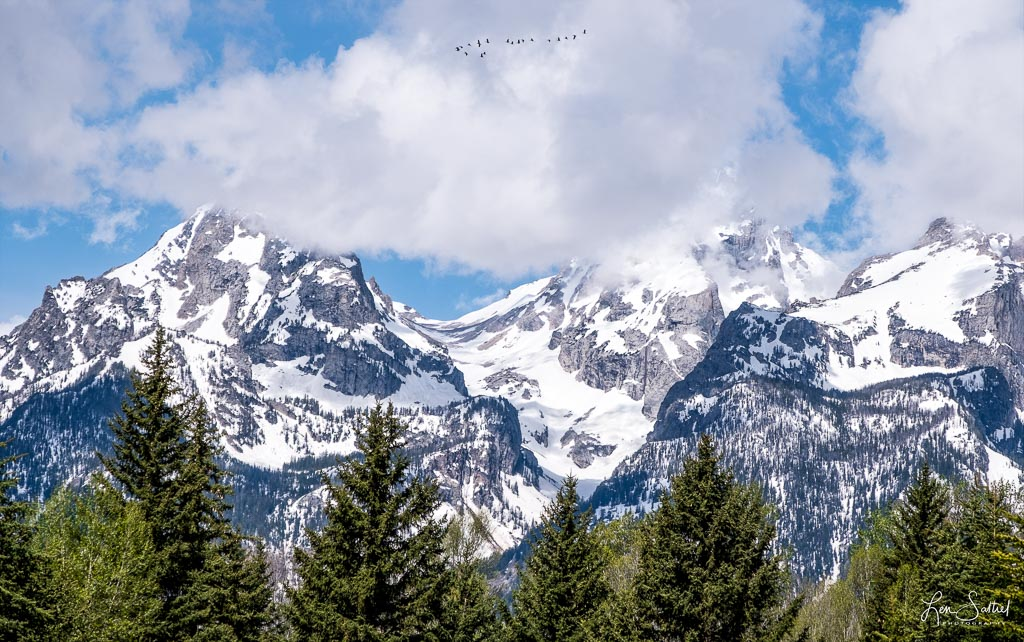 Migration Over the Tetons