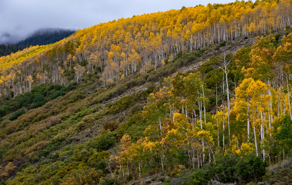 Golden Landscape