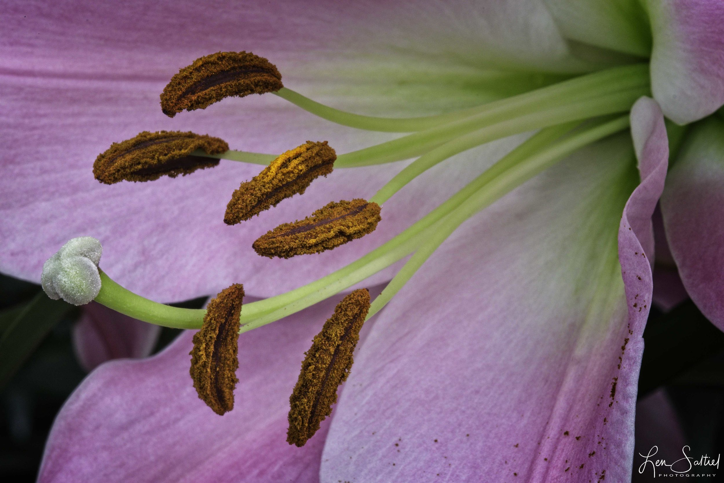 Pollen, Longwood Gardens, Kennett Square, Pennsylvania