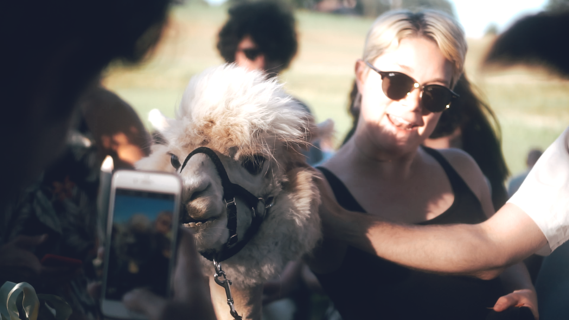 AKQA-SUMMER-PARTY-LLAMA.png