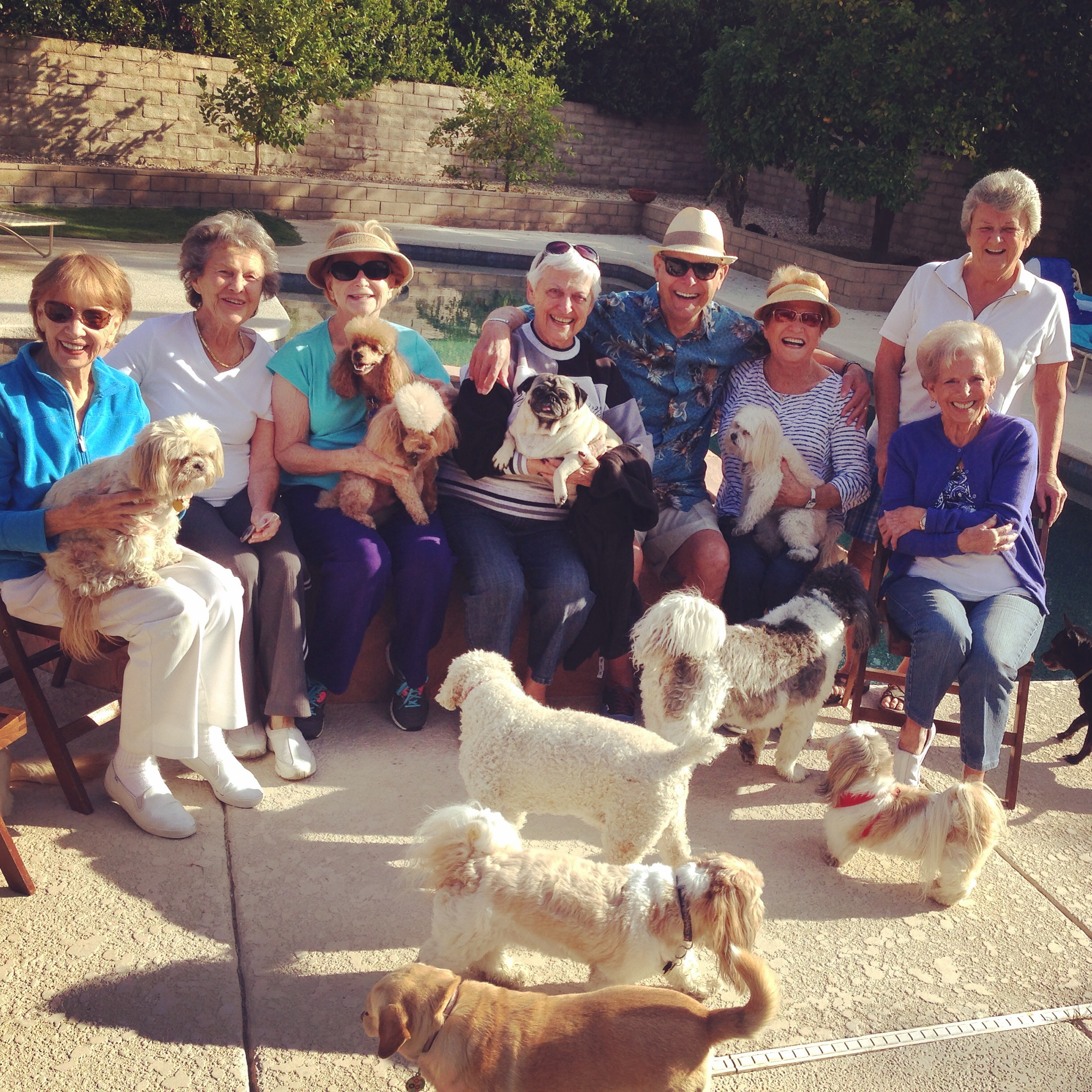 A picture of my Grandma Nita and her FABULOUS doggy Club—the inspiration for  Early Retirement!