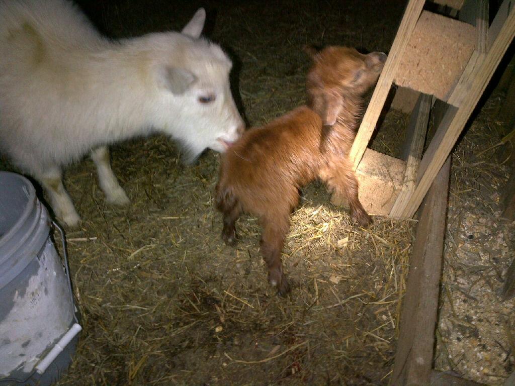 Marshmellow baby 1.JPG