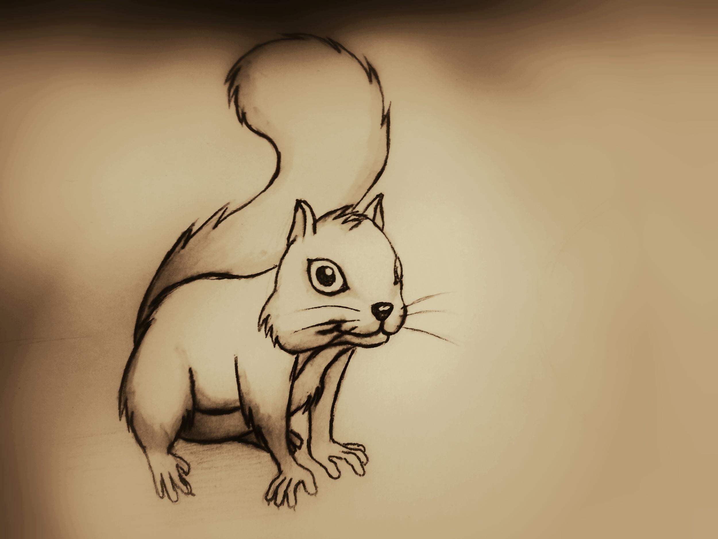 Squirrel illustration by Derek Mit