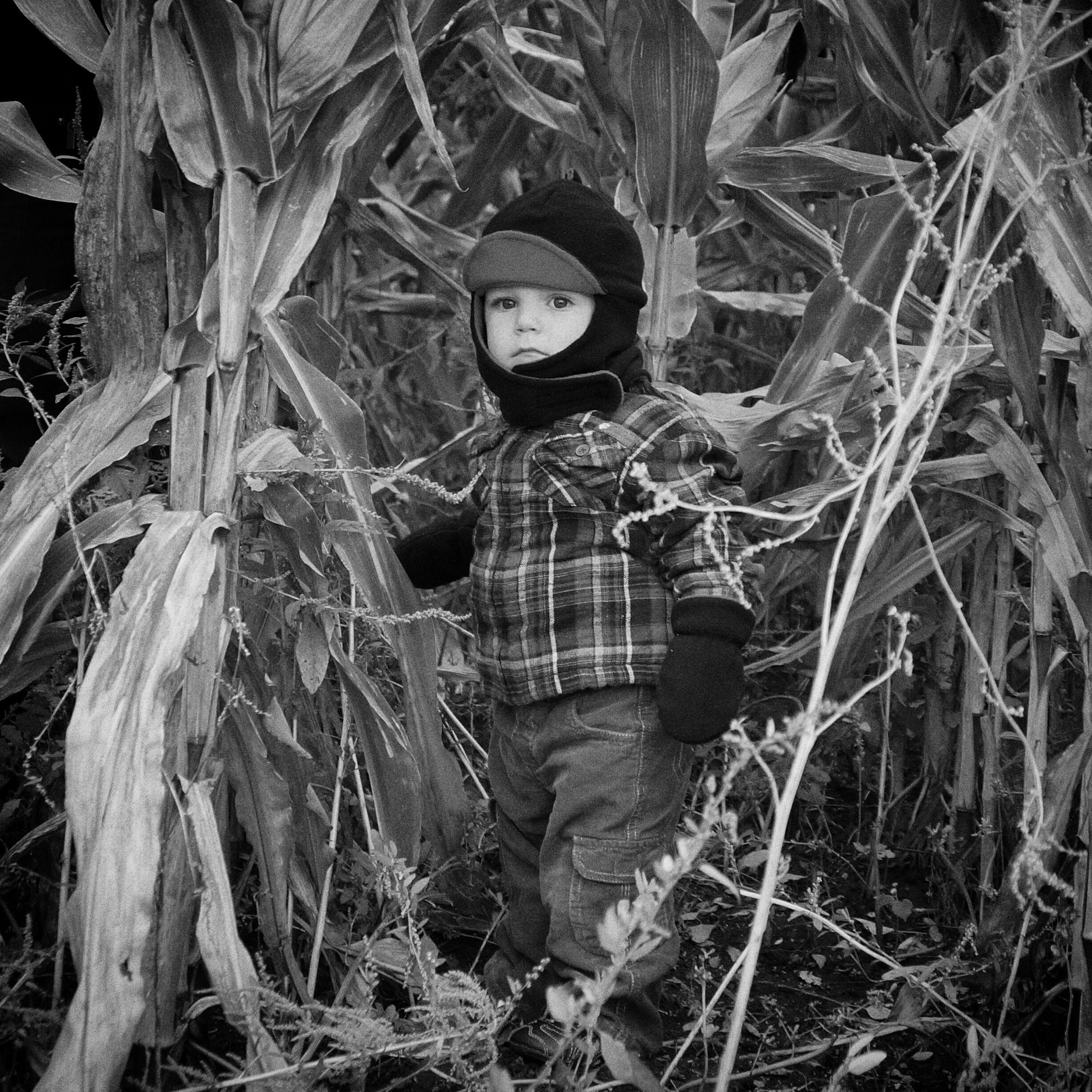 Ryker in the corn at the pumpkin patch
