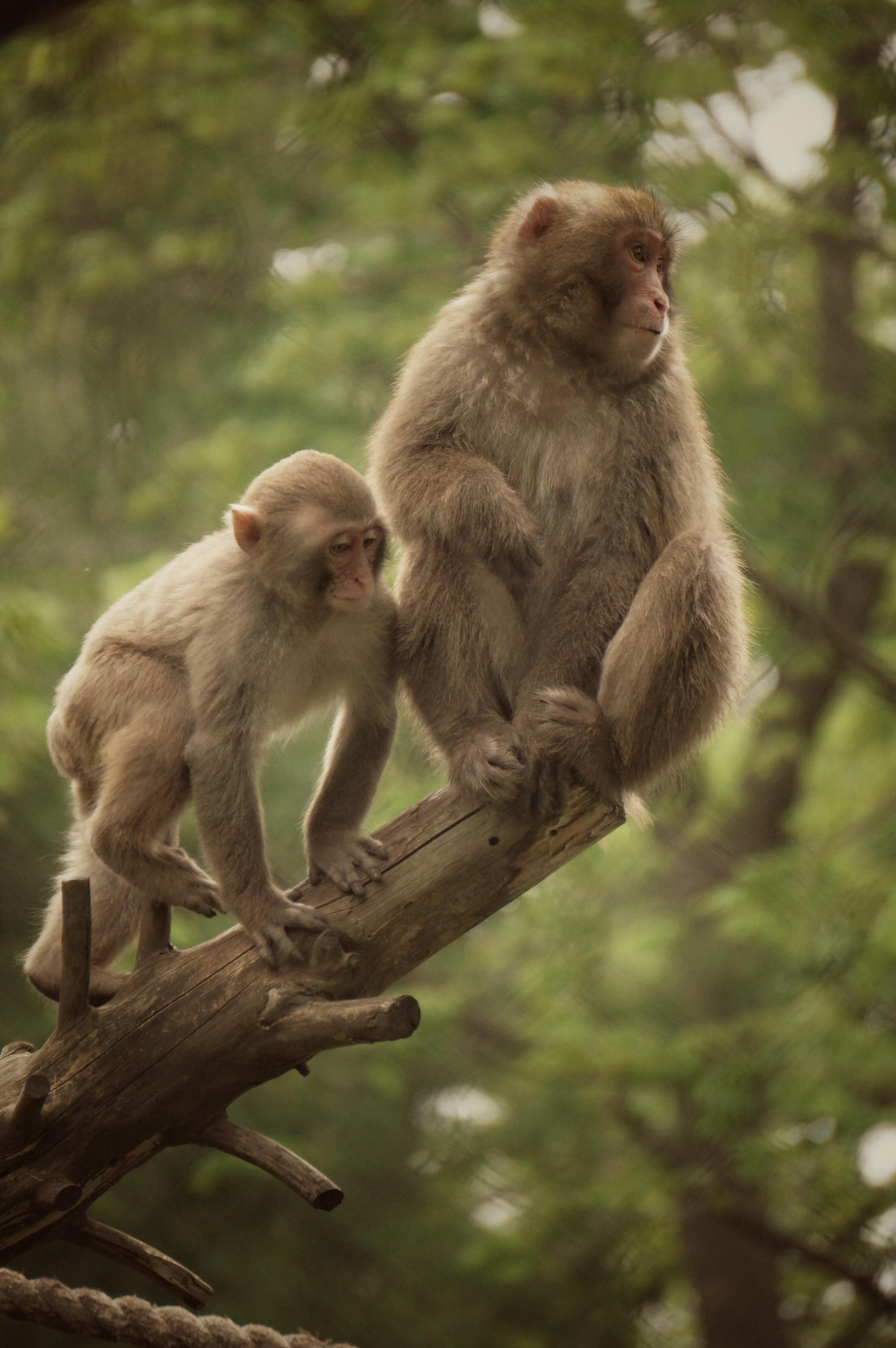I'm not your monkey