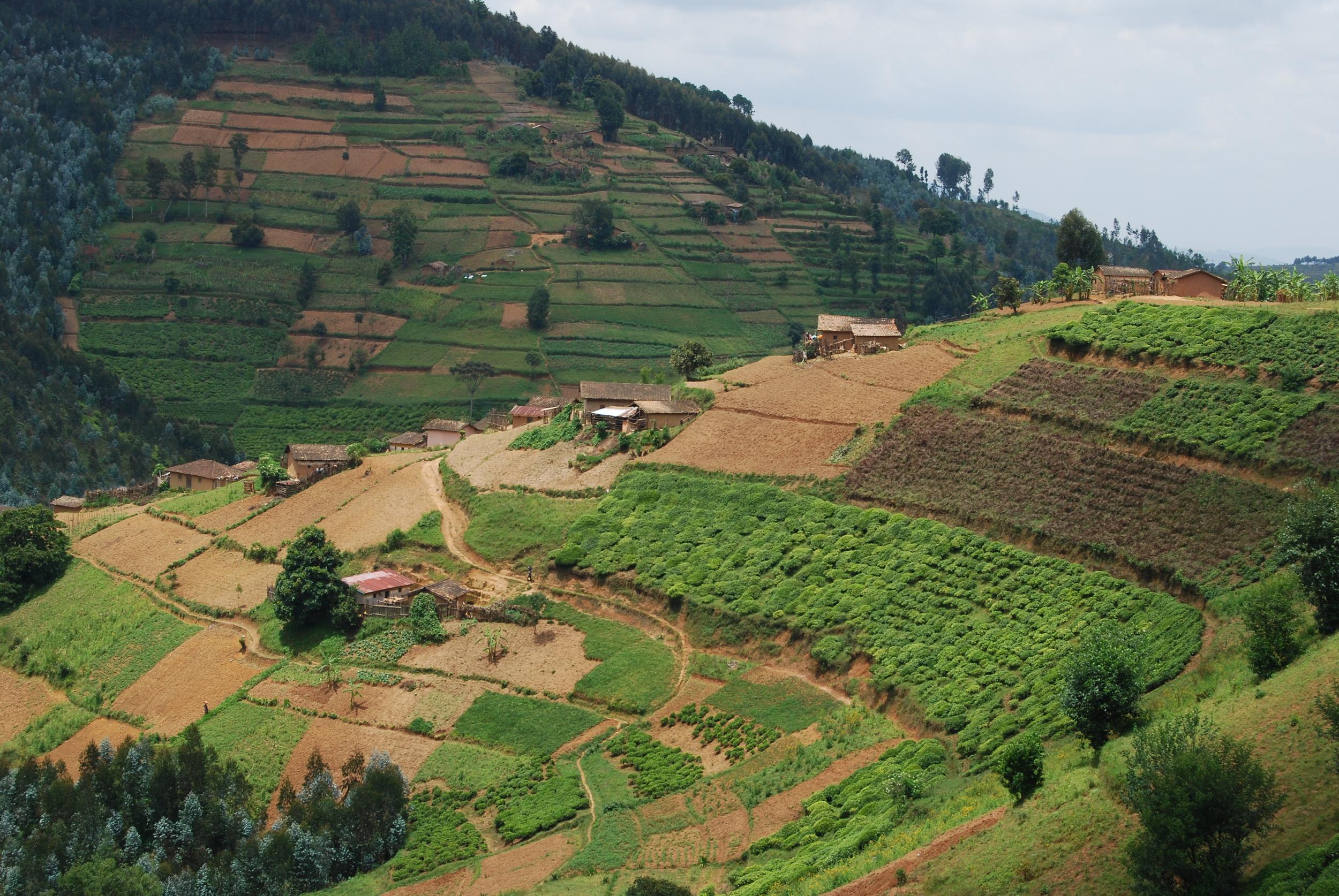 Kitabi Tea Plantation
