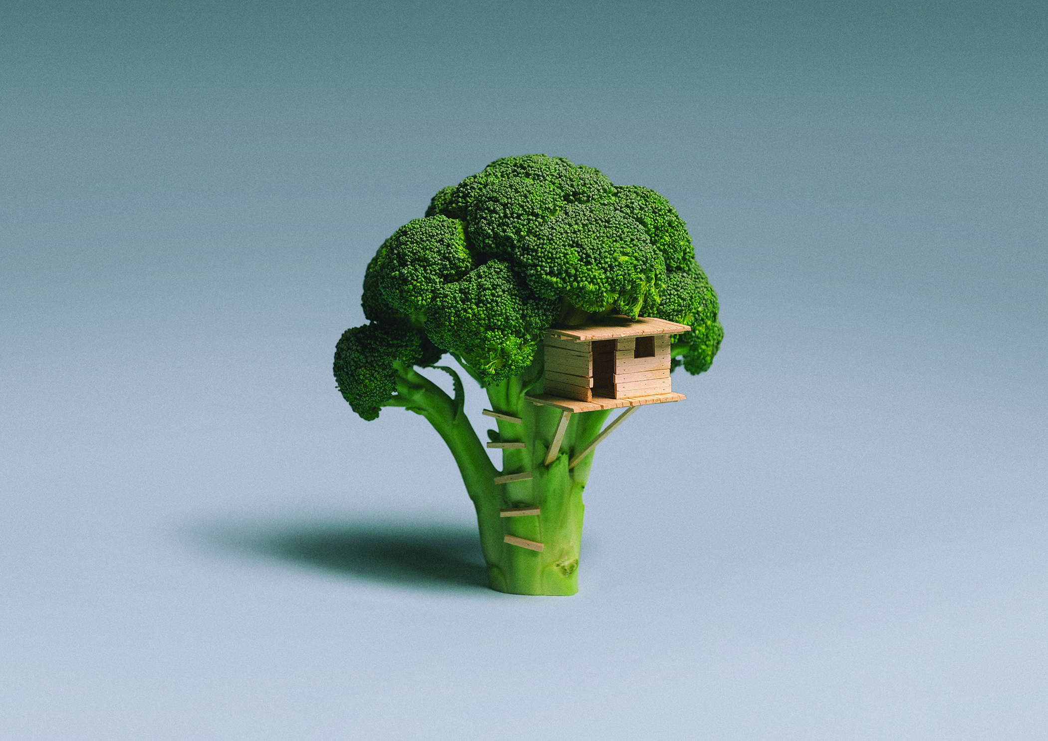 Broccoli_House_lo-res.jpg