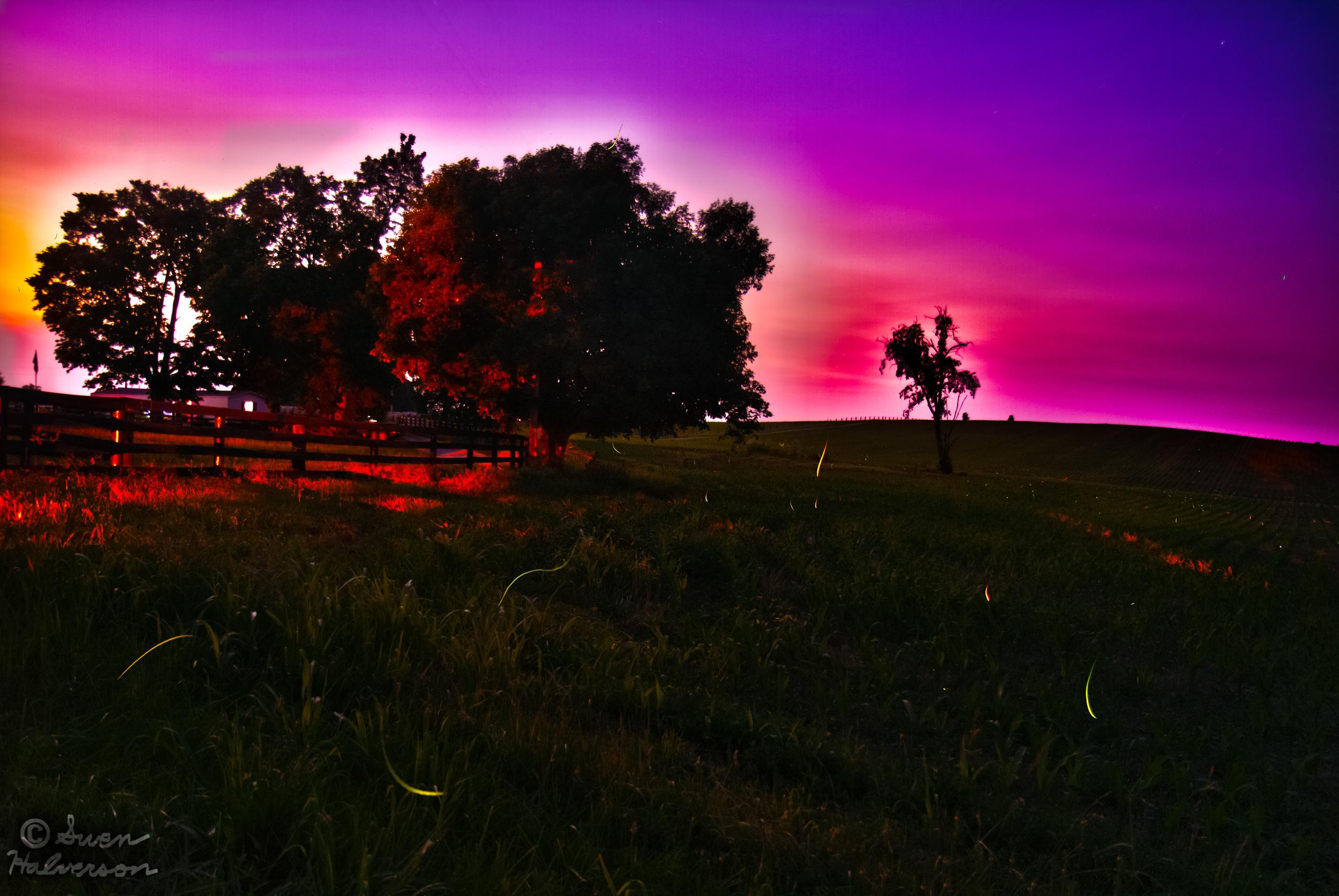 Theme: Dusk <br>Title: Fireflies