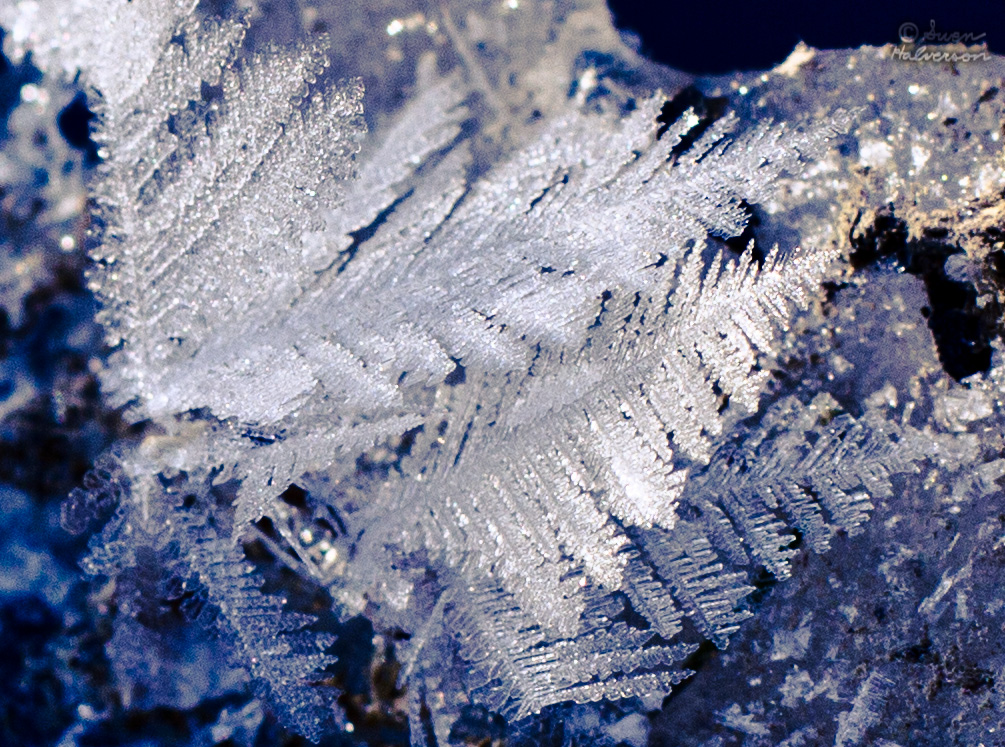 Theme: Cold  <br>Title: Feathers Of Ice 1