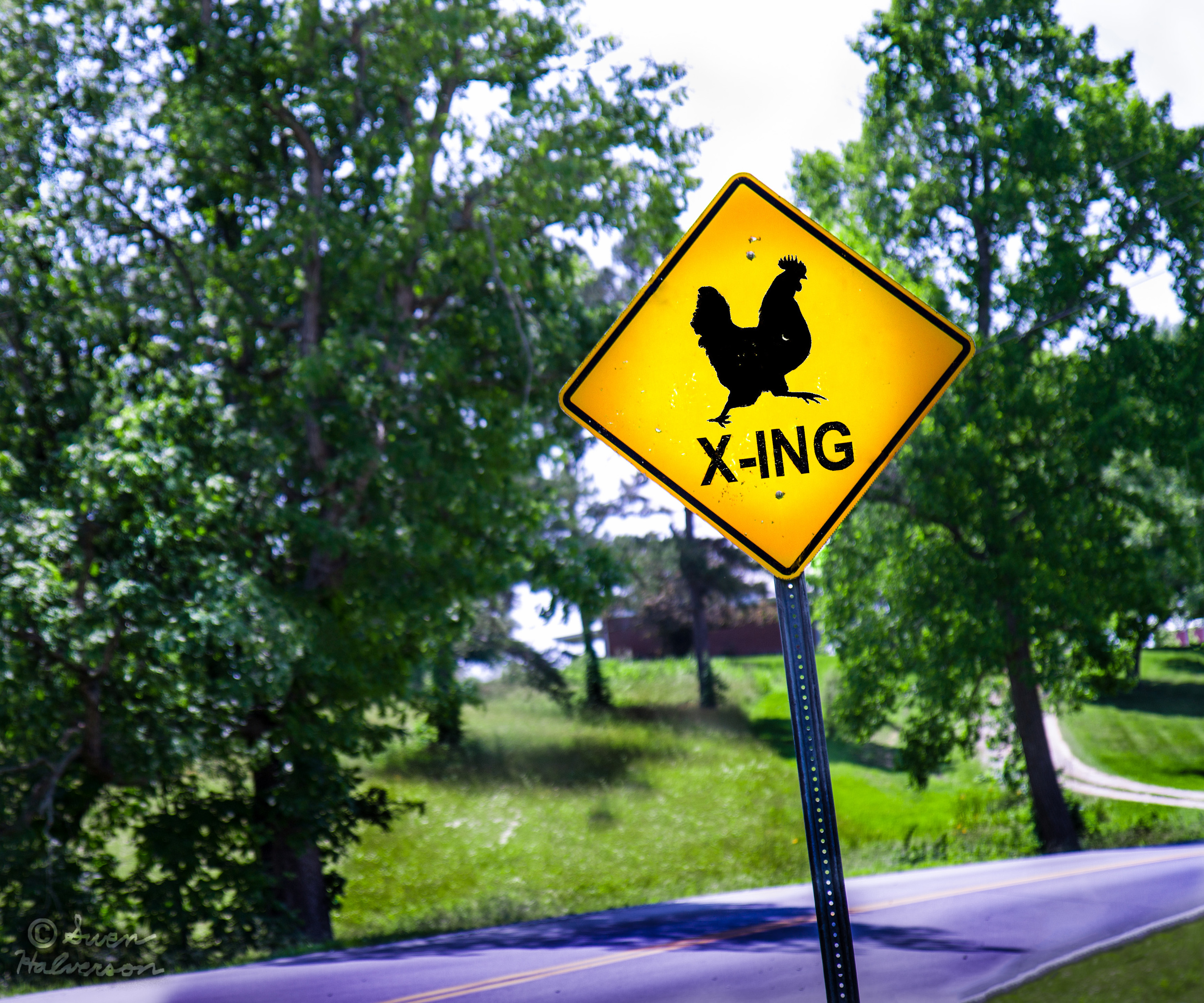 Theme: Yellow <br>Title: Chicken Crossing