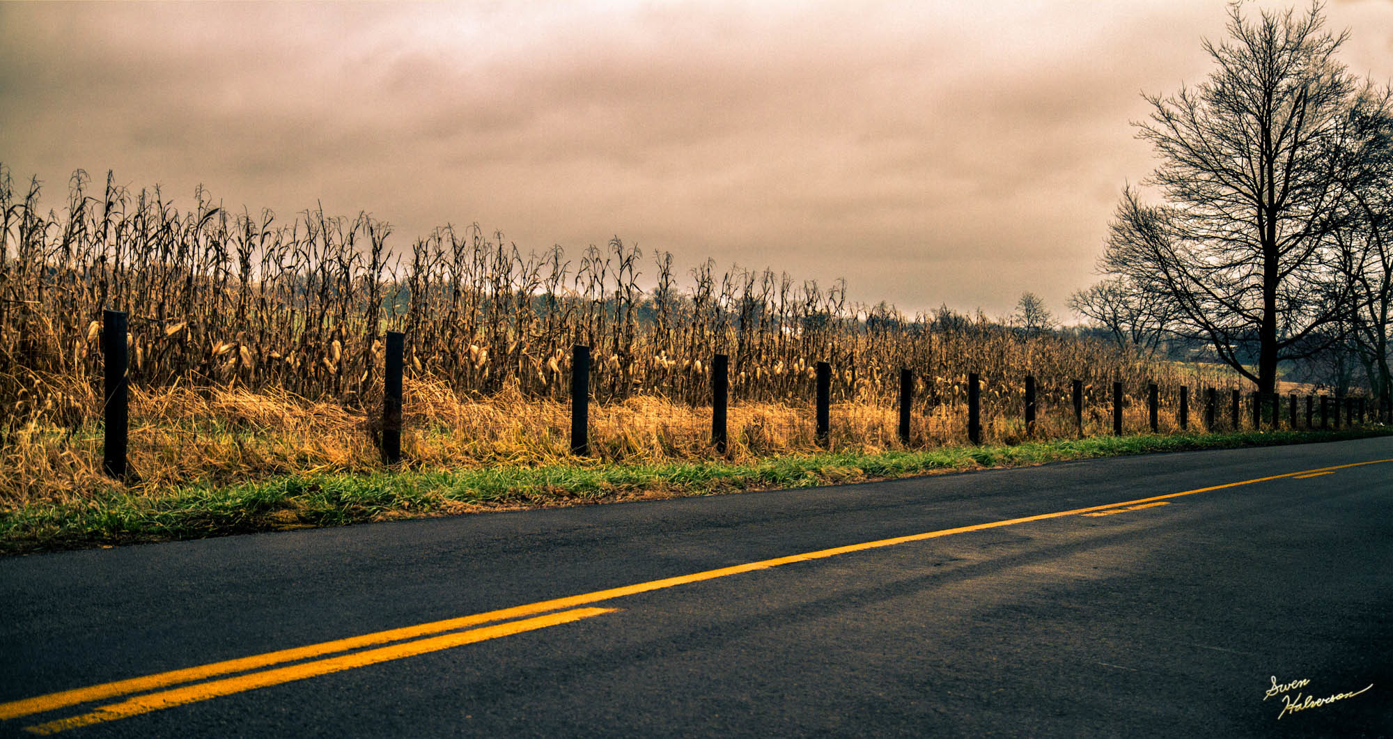 Theme: Road | Title: The Road Less Traveled