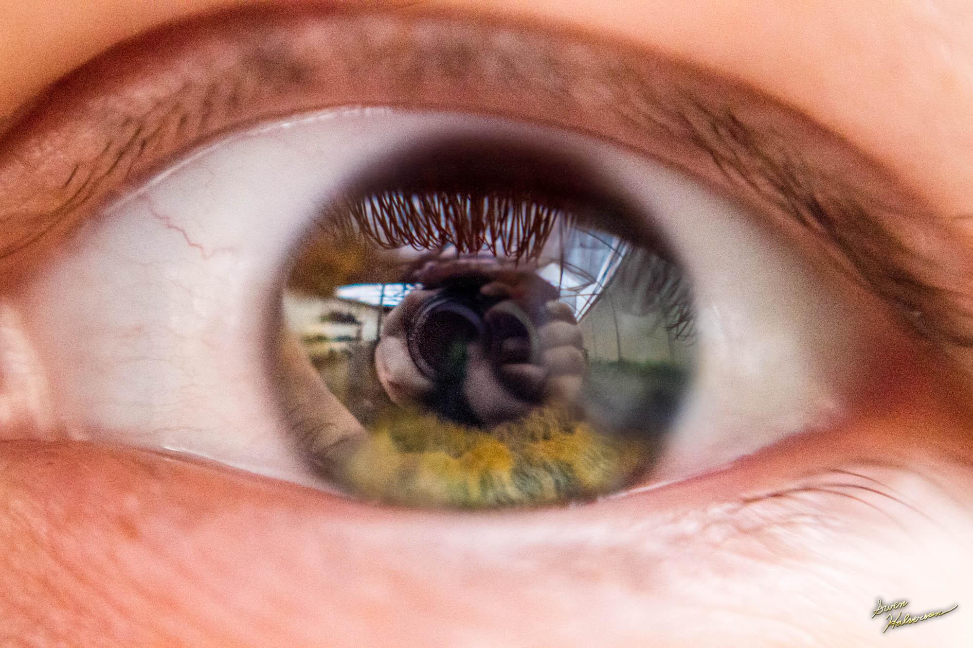 Theme: Eye | Title: Eye Blend