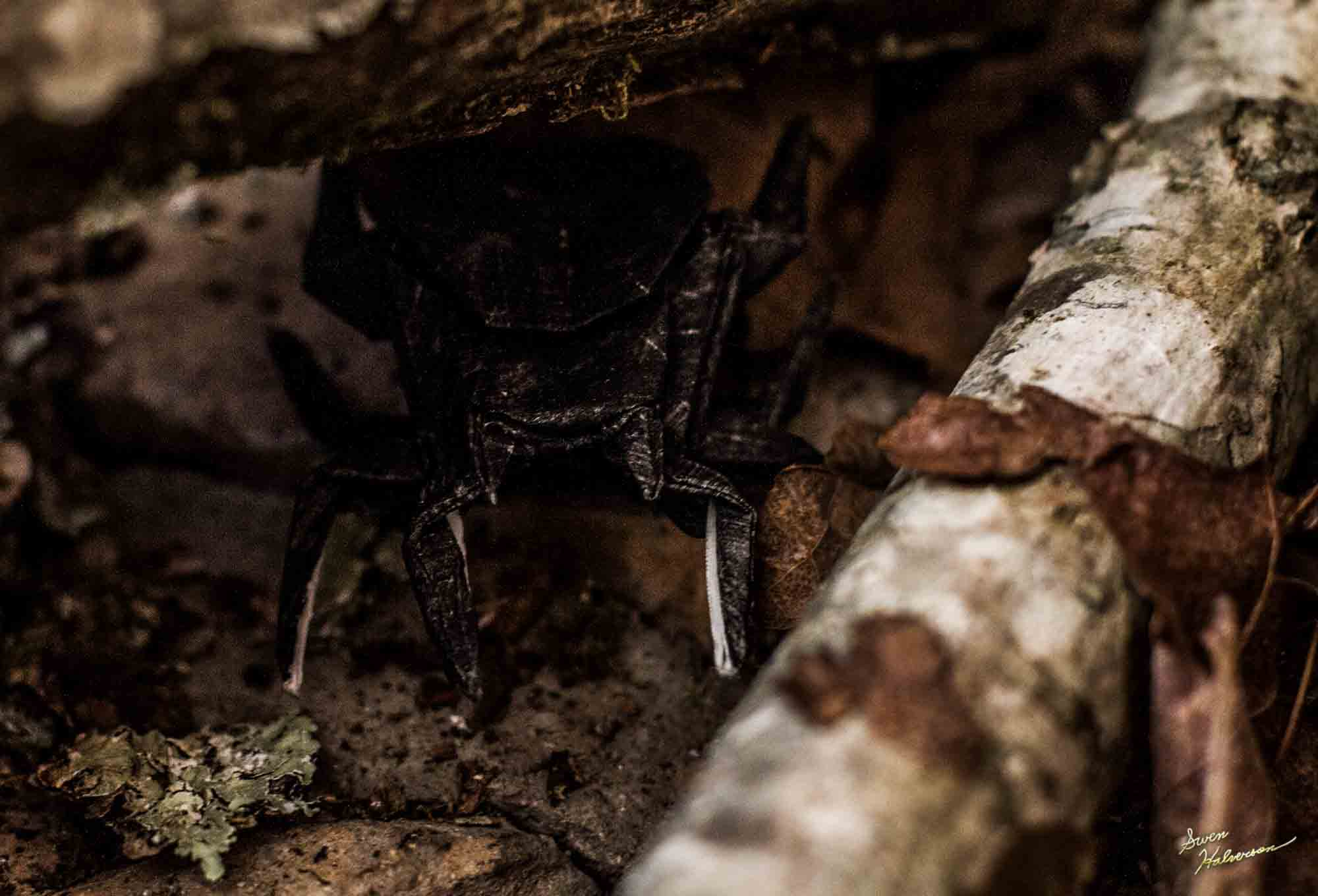 Theme: Origami | Title: Spider Lurking In The Shadows