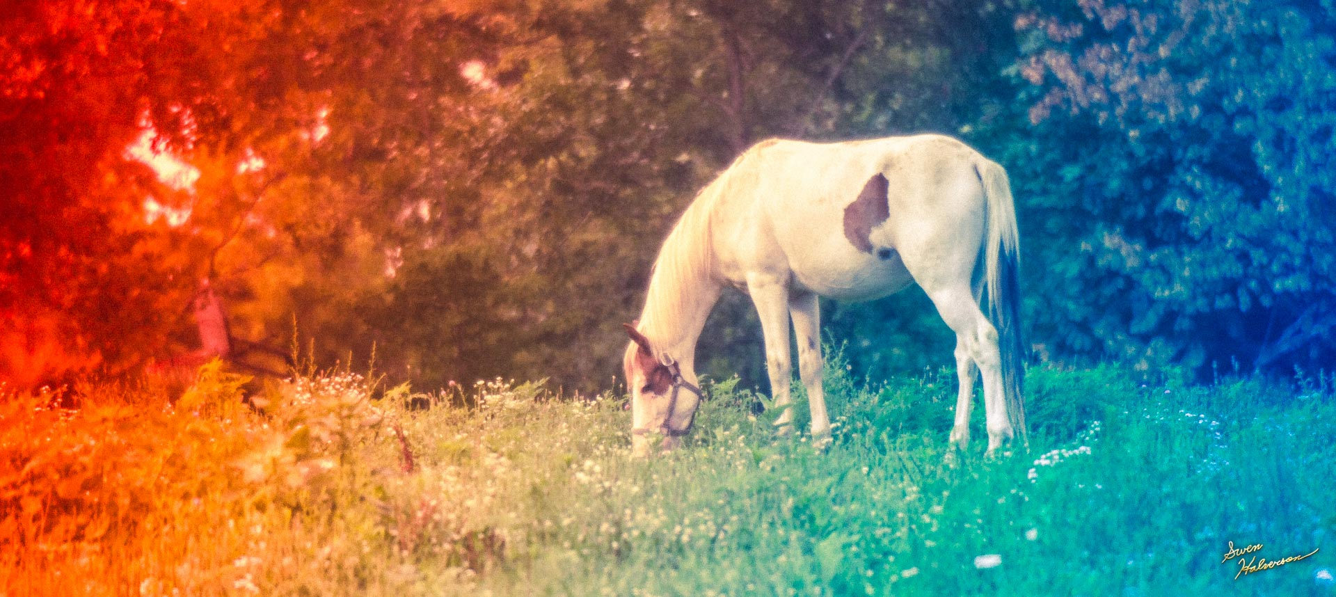 Theme: Animal | Title: The Horse