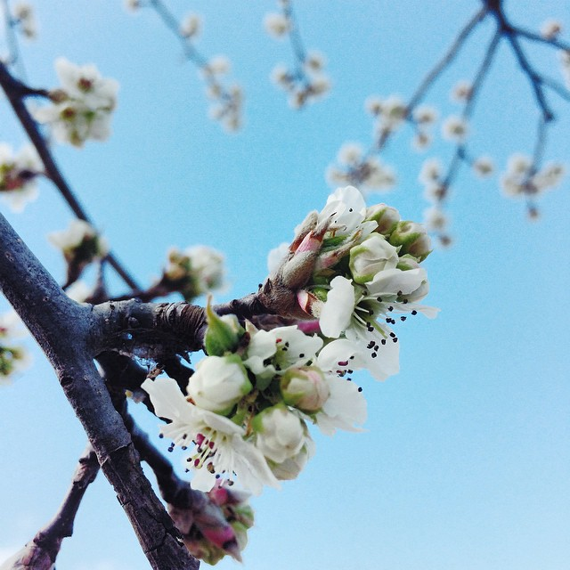 Bold statement It is not the first day of spring. Spring is definitely on the way though and this city sure knows how to put on a show. Cherry blossoms, Floriade, sailboats on the lake, picnics in the park + hot air balloon rides for a bird's-eye vie.jpg