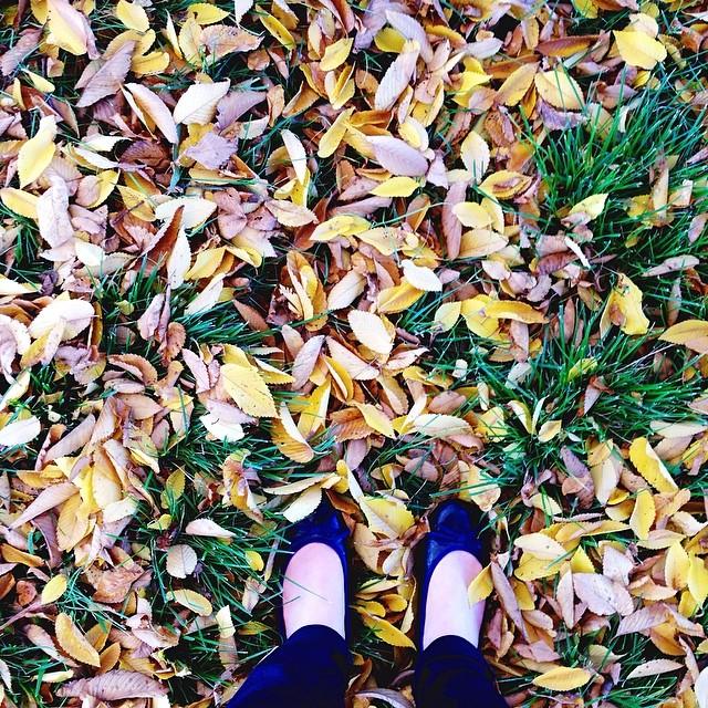 New post  Autumn colour Gold www.netherleighblog.com #canberra .jpg