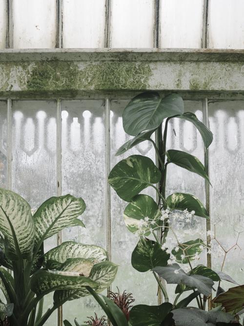 Palm House, Belfast Botanic Garden