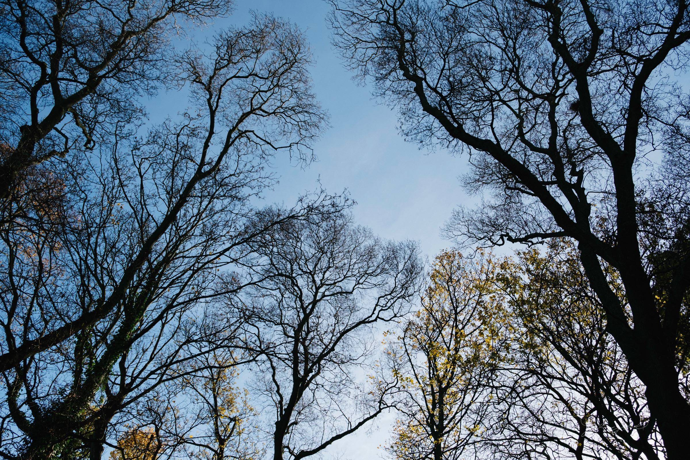 Winter is nearly here - bare branches - Thomas Fitzgerald Photography