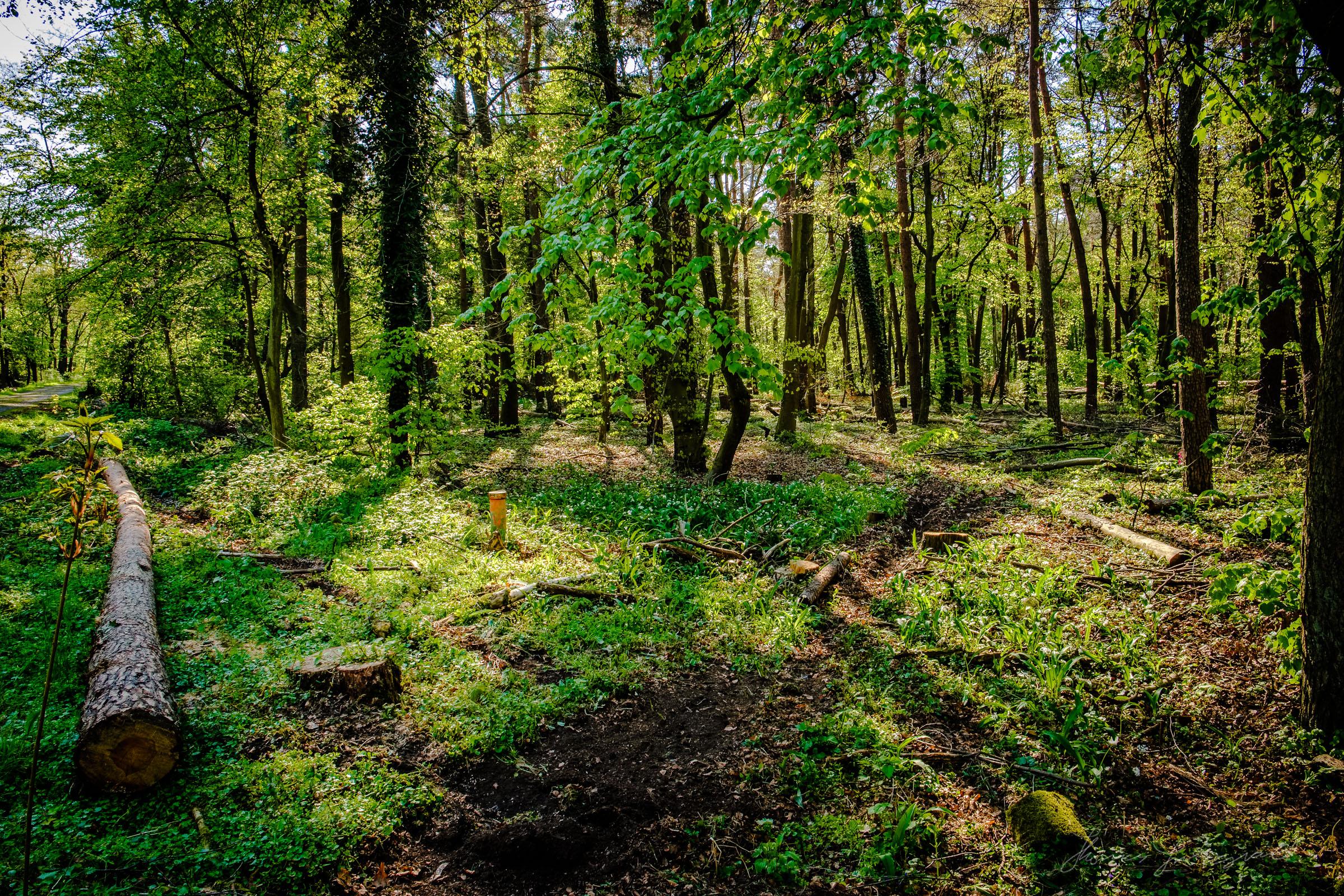 Westwald Woods Darmstadt