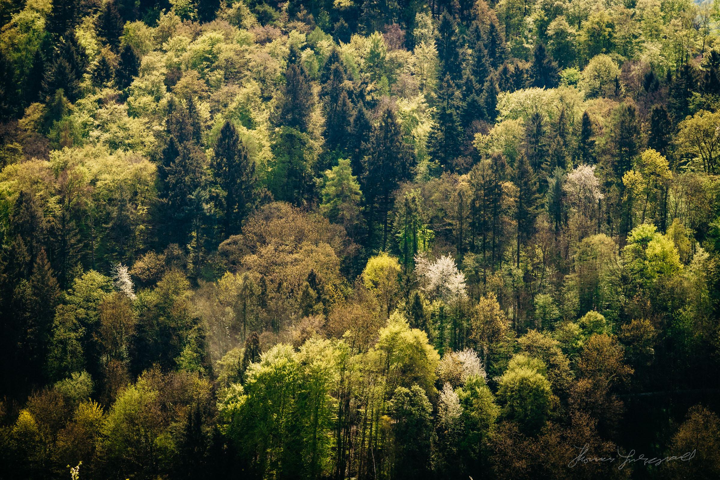 Heppenheim Forest