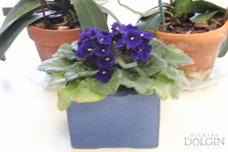 flowers (2 of 5).jpg