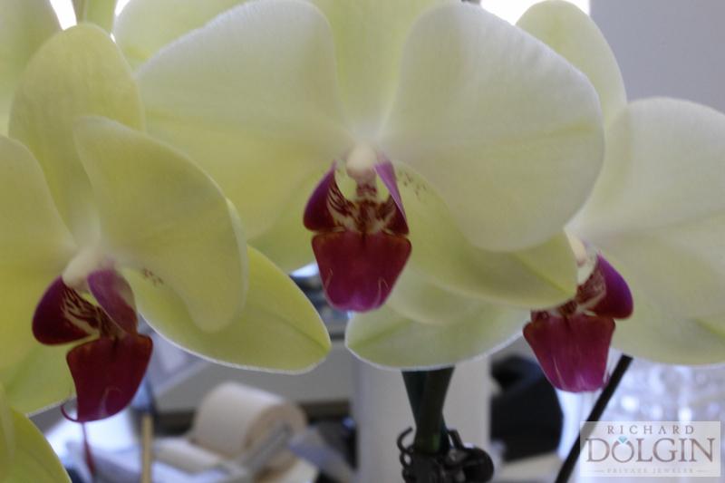 flowers (3 of 5).jpg