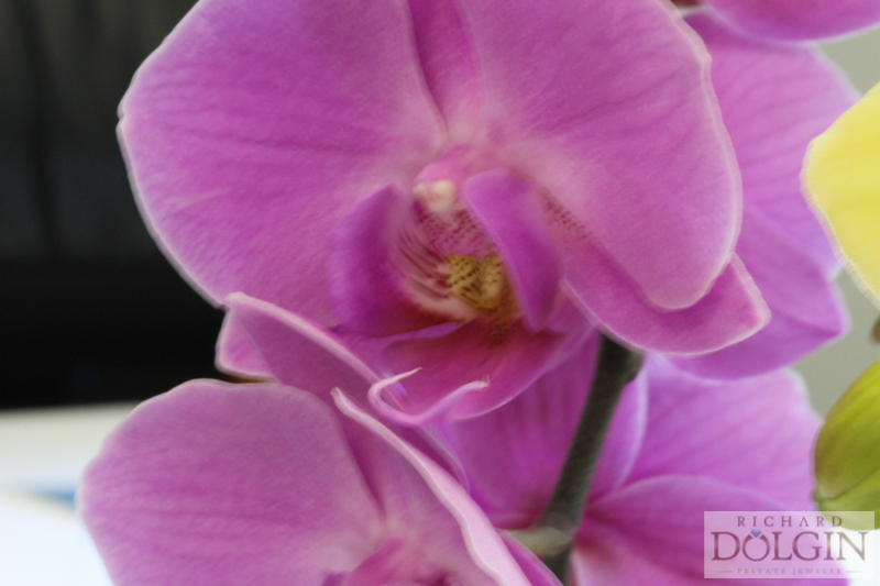flowers (4 of 5).jpg