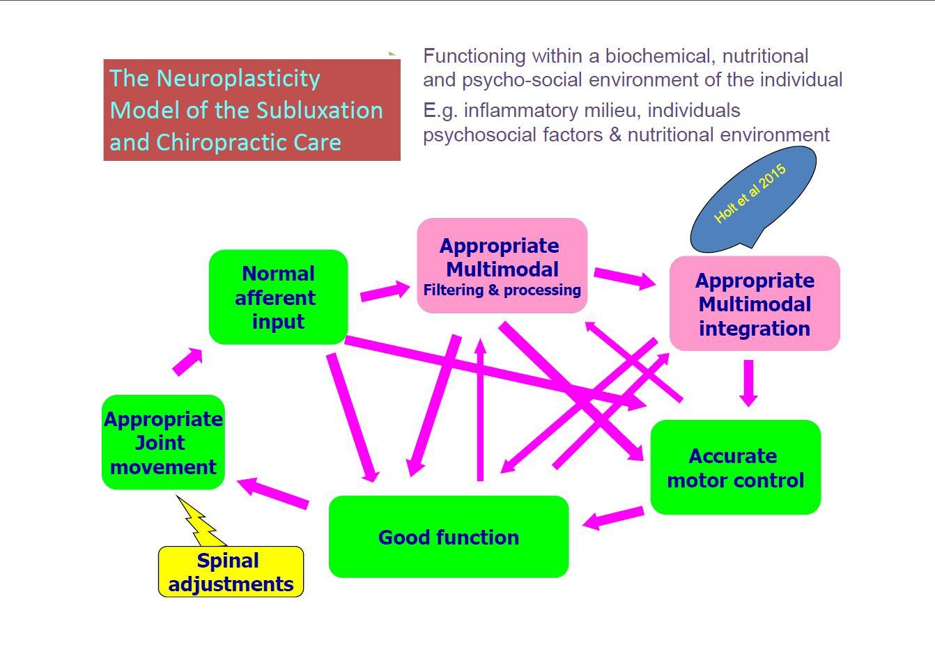 neuroplasticity.JPG