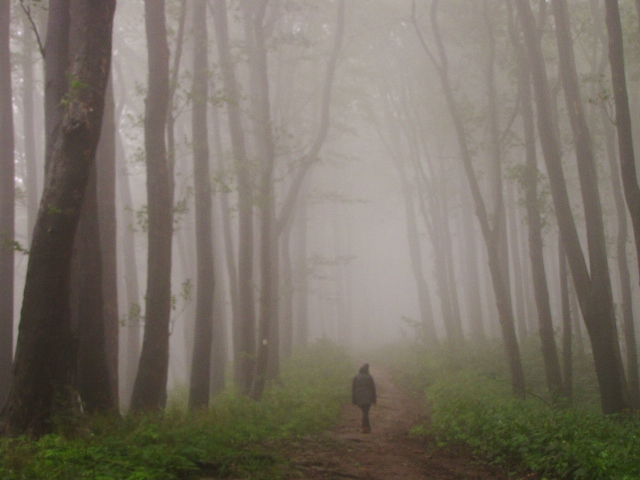comfortably lost in the mist (640x480).jpg