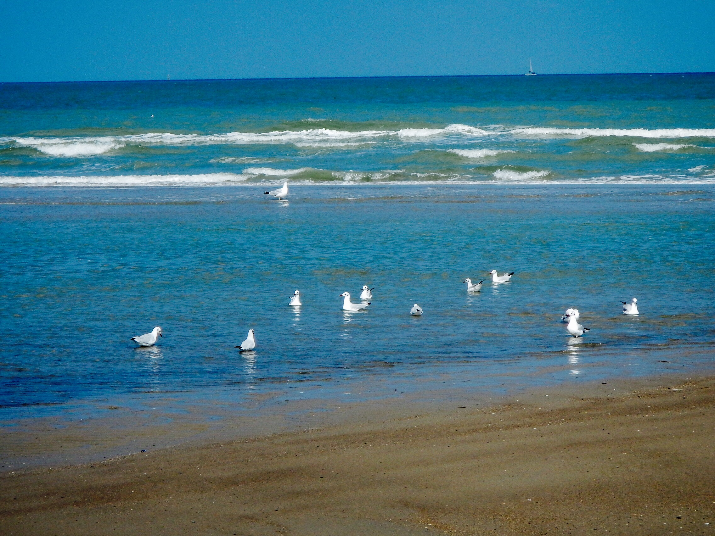 Gulls along the Shore.jpg