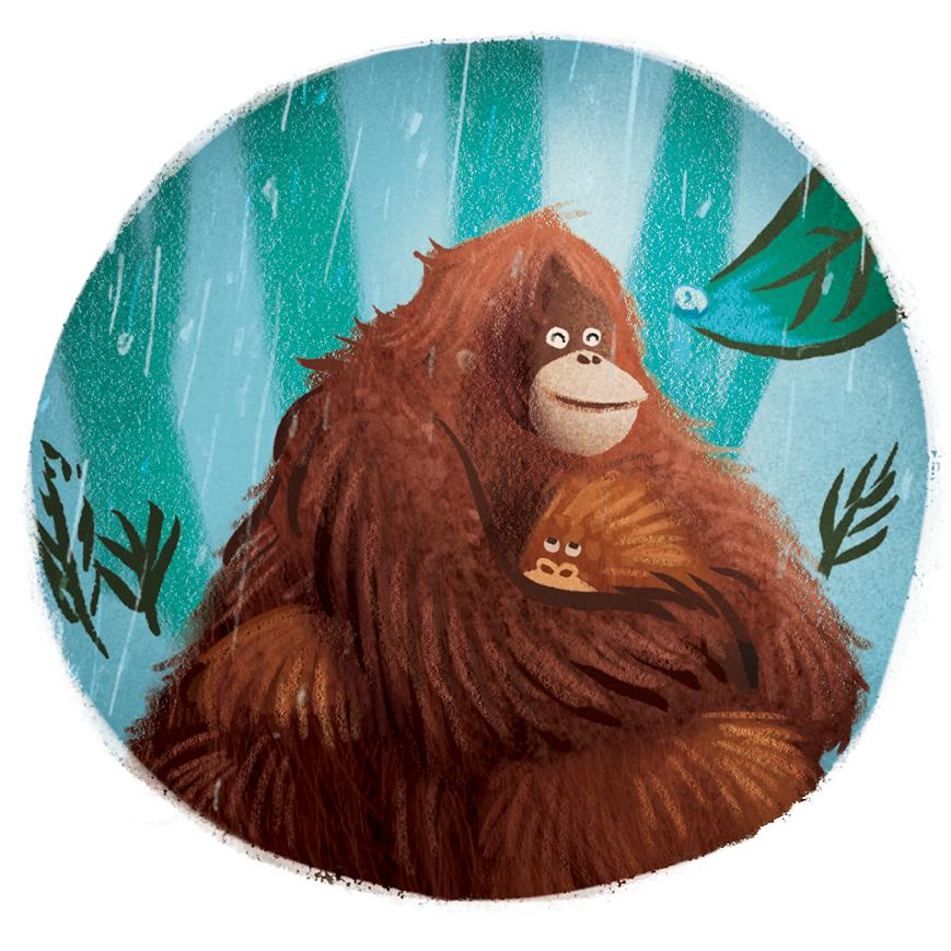 Orangutankaaww.jpg