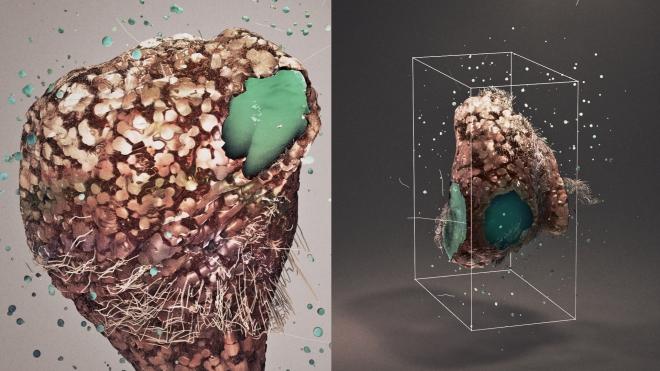 Microscopic leaps Markos R Kay inspiration design