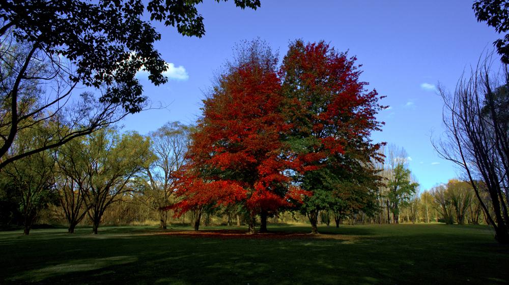 DavidElkins_Photography_Autumn3.jpg