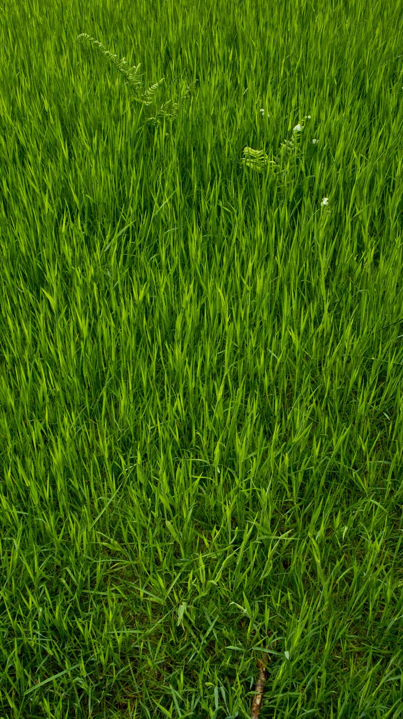 DavidElkins_Photography_Grass.jpg