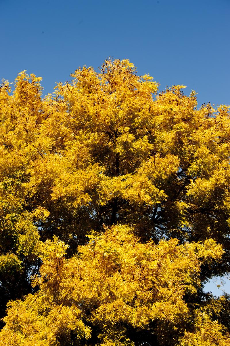 DavidElkins_Photography_The Graduation Tree.jpg