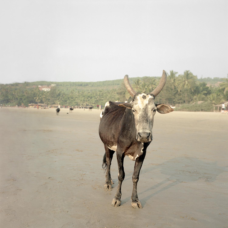 INDIA_042.jpg