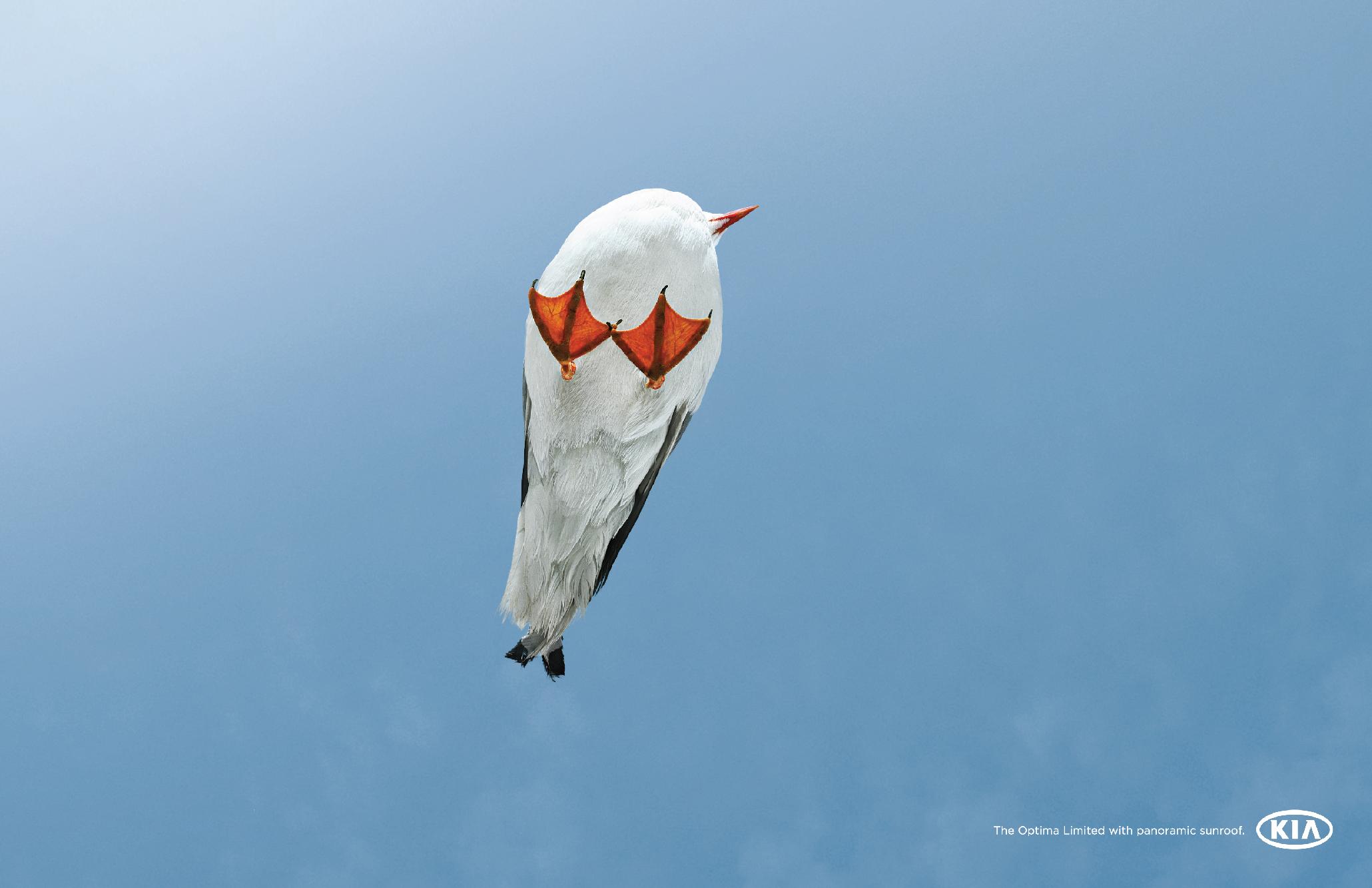kia_optima_bird.jpg