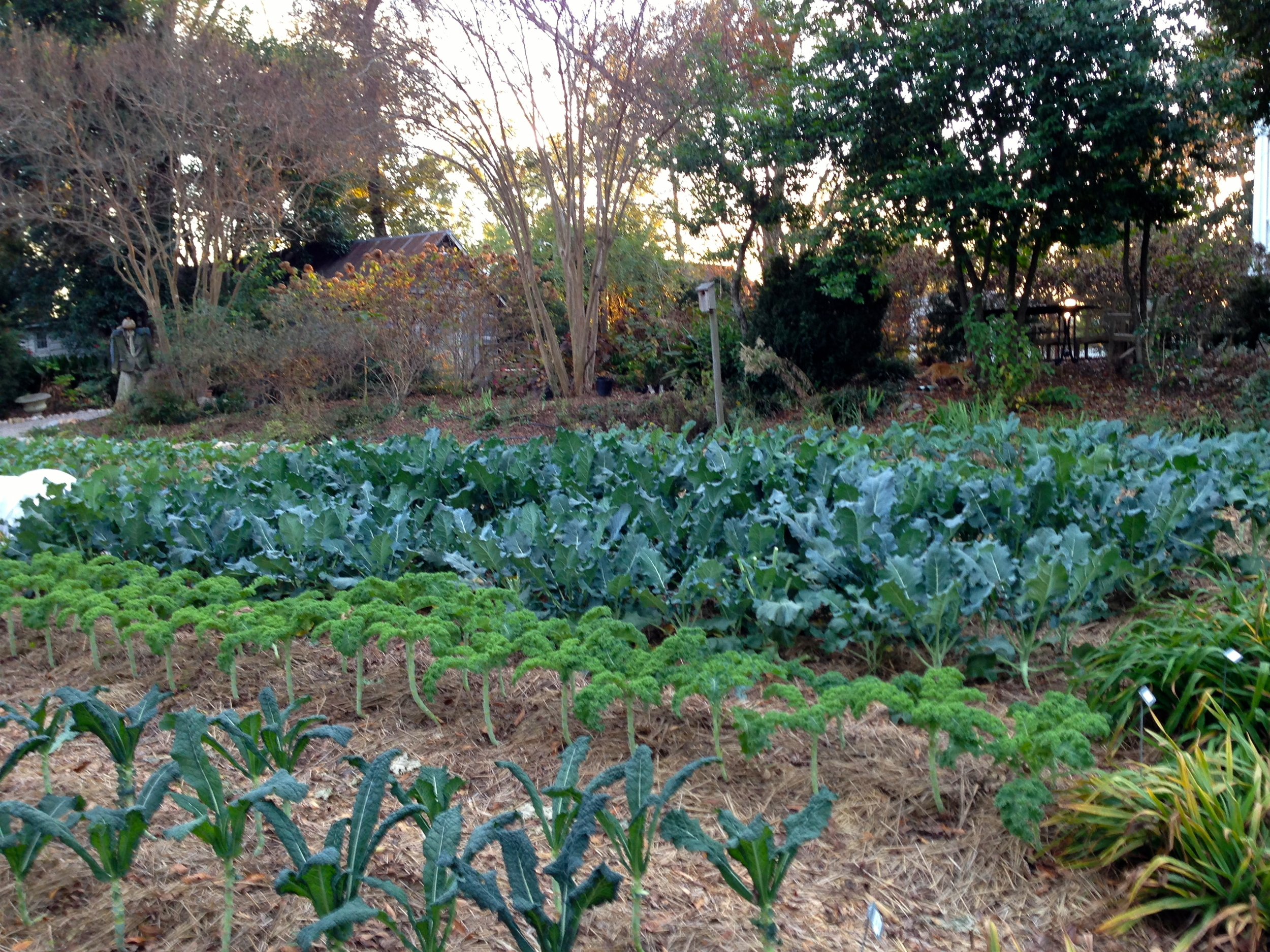 In the two photos above, fields of greens rule the winter garden on Elm Street.