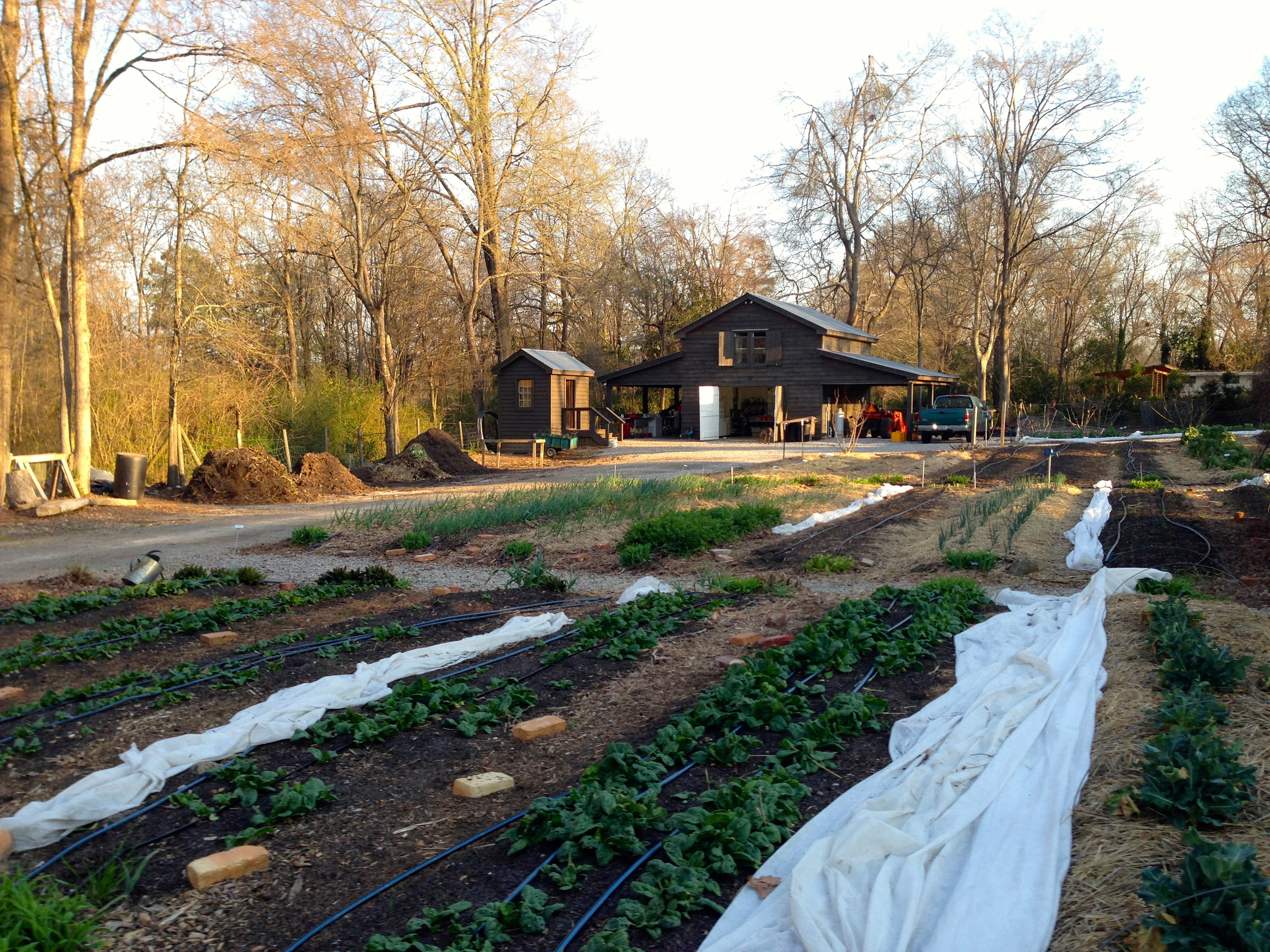 """The garden beds in March: The 'tender"""" crops have their row covers handy and ready for covering up in case it is to get to freezing."""